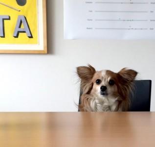 Meta Design Office